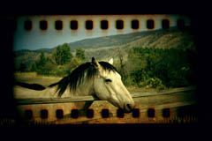 35mm filmstrip photo of horse holga sprocket film